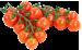 Vine Tomatoes